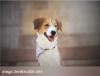 sixtmaellys - éleveur canin Dogzer