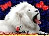 melane2012 - éleveur canin Dogzer