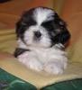 Fripon33 - éleveur canin Dogzer