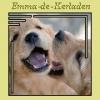 Laura65000 - éleveur canin Dogzer