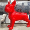 yusoupha - éleveur canin Dogzer