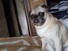 kikiche2 - éleveur canin Dogzer