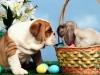 mirages80 - éleveur canin Dogzer