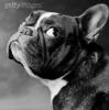 Samy72 - éleveur canin Dogzer