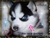 lucinda97 - éleveur canin Dogzer