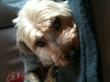 elisa92084 - éleveur canin Dogzer