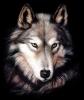 rilita100 - éleveur canin Dogzer