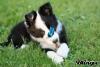 averoupette - éleveur canin Dogzer