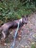 TPJBC - éleveur canin Dogzer
