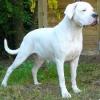 ginetteh - éleveur canin Dogzer