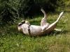 Gameuse - éleveur canin Dogzer
