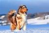 EquitLove - éleveur canin Dogzer