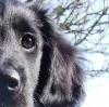 M0ca - éleveur canin Dogzer