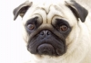 louann_ricard - éleveur canin Dogzer