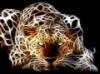 Wildcat13 - éleveur canin Dogzer