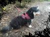 nina31700 - éleveur canin Dogzer