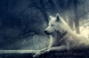 JadeWolves - éleveur canin Dogzer