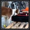 MrSoftBeat - éleveur canin Dogzer
