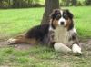 engyandkayla - éleveur canin Dogzer