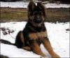 Fanoue - éleveur canin Dogzer