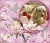 meguy59610 - éleveur canin Dogzer