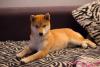 DiabloGirl63 - éleveur canin Dogzer