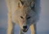 Paupau00789 - éleveur canin Dogzer