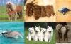 cassou01 - éleveur canin Dogzer