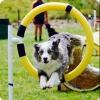 leledu592 - éleveur canin Dogzer