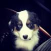 LiiloobyDolly - éleveur canin Dogzer