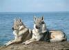 camillou192 - éleveur canin Dogzer