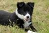 fandechien61 - éleveur canin Dogzer
