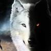 Esprine33 - éleveur canin Dogzer
