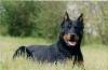 melissa41400 - éleveur canin Dogzer