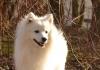 Jetikk0 - éleveur canin Dogzer