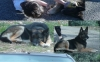 momojun - éleveur canin Dogzer