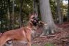 nicotgx40 - éleveur canin Dogzer