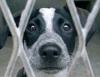 Batrachien24 - éleveur canin Dogzer