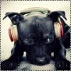 ellma17 - éleveur canin Dogzer