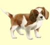 roro626 - éleveur canin Dogzer
