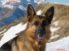 manon7711 - éleveur canin Dogzer