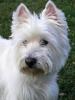 Emma67 - éleveur canin Dogzer