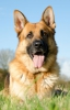 Ivanaa.Horse - éleveur canin Dogzer