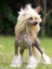 babouland - éleveur canin Dogzer