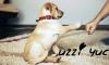 UzziZuc - éleveur canin Dogzer
