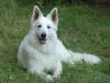 lovedog29.12 - éleveur canin Dogzer