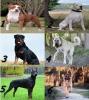 camabby5 - éleveur canin Dogzer