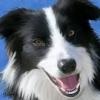 dino10 - éleveur canin Dogzer