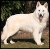 perroschidos - éleveur canin Dogzer
