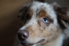 Jackson72 - éleveur canin Dogzer